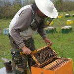 Όλοι οι μελισσοκόμοι της ΠΕ Κορινθίας οφείλουν να υποβάλουν στην ΔΑΟΚ αίτηση δήλωσης κατεχόμενων κυψελών