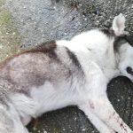 Κτηνωδία: Έβγαλαν τα μάτια αδέσποτου σκύλου